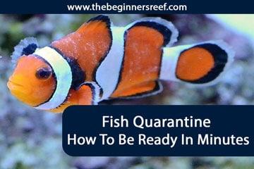 Fish Quarantine Header
