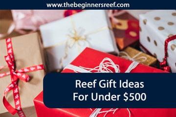 Reef Gift Ideas Under $500