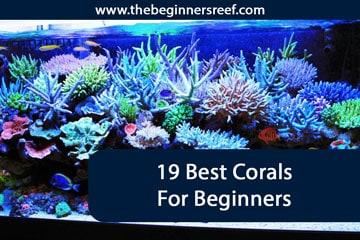 19 Best Beginner Corals