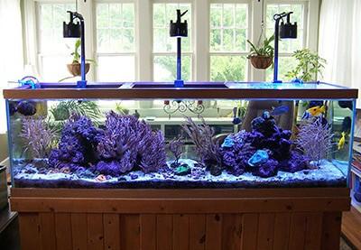 Natural Sunlight on Aquarium
