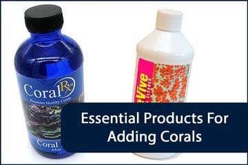 Corals Essential Header