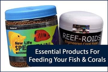 Aquarium Feeding Essentials Header