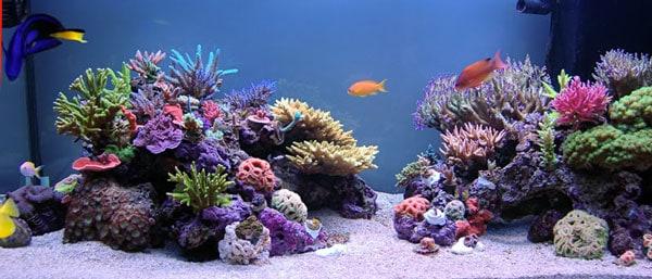 16 Tips For Creating Stunning Aquarium Aquascapes San Diego Marine Aquarists Sdma