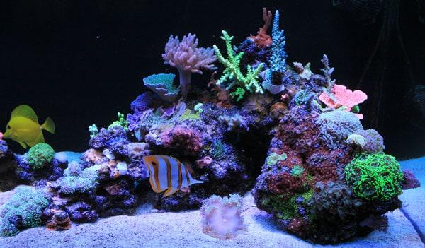 16 Tips For Creating Stunning Aquarium Aquascapes
