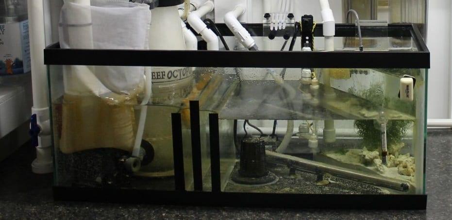 DIY Aquarium Sump
